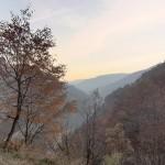 Alpine Meadow in autumn colors