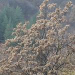 Alpine Meadow – autumn