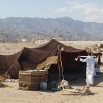 Bedouin Festival