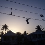 Caye Caulker – hanging shoes