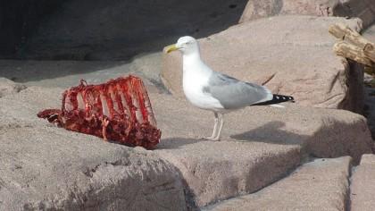Copenhagen zoo: bird stealing bear food