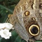 Copenhagen zoo: butterfly on lego
