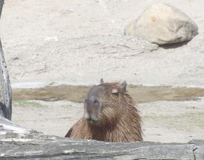 Copenhagen zoo: funny animal
