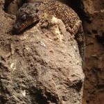Copenhagen zoo: lizard