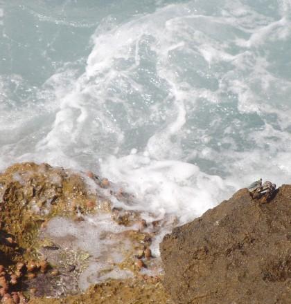 Crab on cliffs (Mozambique)