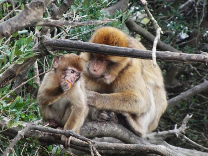 Cute monkey (baby)