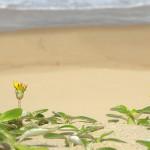 Desert flower beach