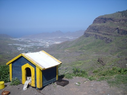 Doghouse with a view