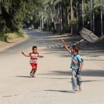 Egypt kite