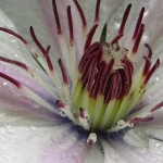 Flower macro closeup