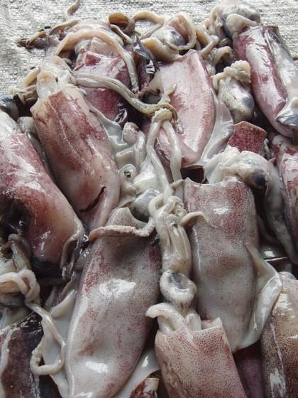 Fresh squid octopus, Maputo fish market