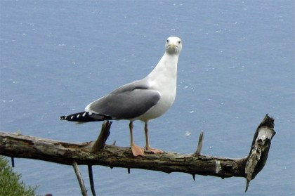 Funny bird photo picture