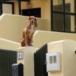 Funny dog high up