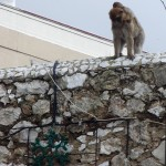 Funny monkey inside city with Christmas decoration