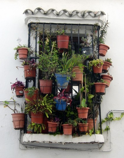 House plants on mini balcony, Tarifa