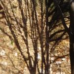 Lisbon tree shadow, Portugal