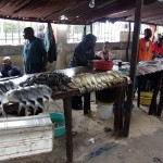 Maputo fish market (with Barracudas)