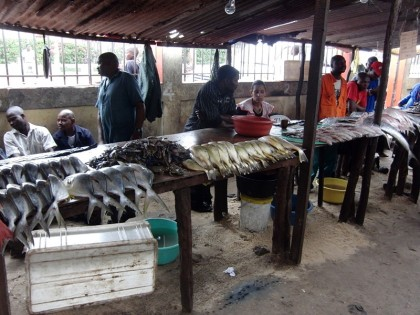 Maputo fish market (with Barracudas)