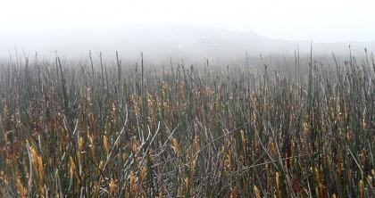 Misty field on mountain top