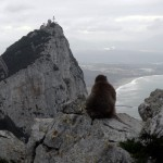 Monkey on rock - Gibraltar view