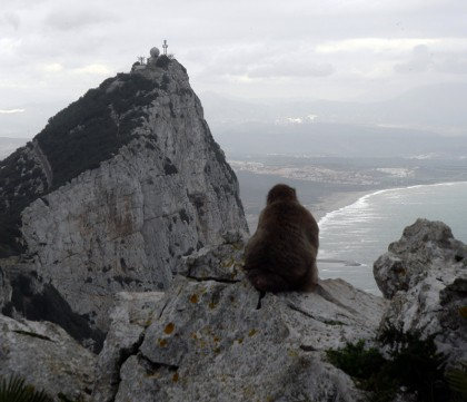 Monkey on rock - Gibraltar view