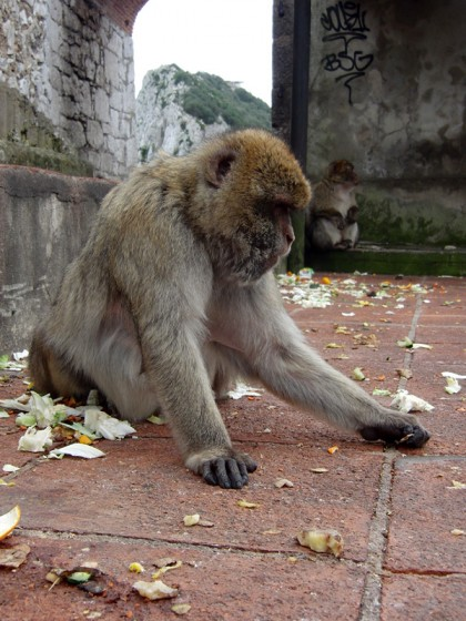 Monkey temple in mountains