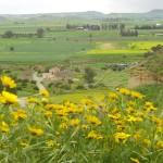 Potamia Cyprus