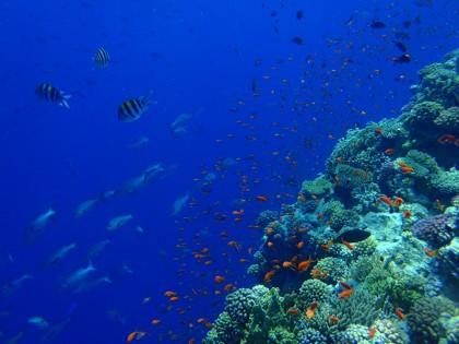 Ras Muhammad Yolanda reef