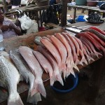 Red fish at Maputo fish market
