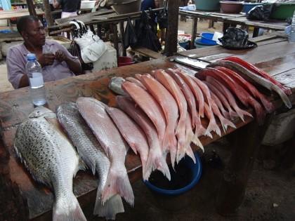 Red fish at Maputo fish market
