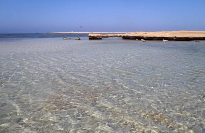 Shark bay Sharm Egypt
