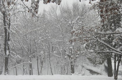 Sofia park in snow