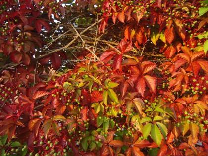 Swedish leaves