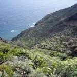 Tenerife nature