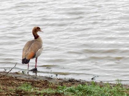 Unknown bird in Kruger Park