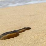 Water snake on beach