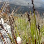 White flower grass